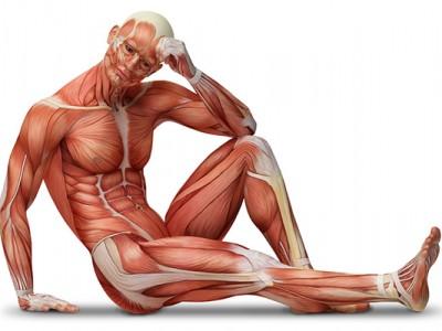 Știința creșterii mușchilor